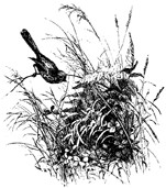 Impression Obsession - Cling Stamp - Nature Nest - By Alesa Baker