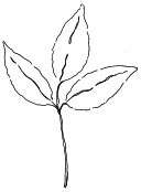 Impression Obsession - Cling Mounted Rubber Stamp - Tres Leaf Stem (by Alesa Baker)