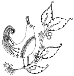 Impression Obsession-Cling Stamp-Bird on Branch