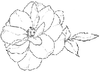 Impression Obsession - Cling Stamp - Gentle Rose - By Alesa Baker