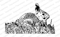 Impression Obsession - Cling Mounted Rubber Stamp - By Tara Caldwell - Rabbit in Grass