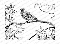 Impression Obsession - Cling Mounted Rubber Stamp - By Tara Caldwell - Bird in a Tree