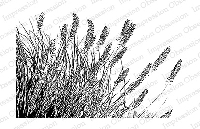 Impression Obsession - Cling Mounted Rubber Stamp - By Tara Caldwell - Wispy Grass