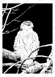 Impression Obsession - Cling Mounted Rubber Stamp - By Tara Caldwell - Night Owl