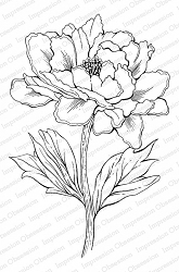 Impression Obsession - Cling Mounted Rubber Stamp By Tara Caldwell - Tree Peony Blossom