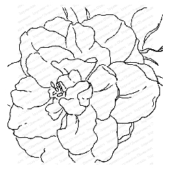 Impression Obsession - Cover A Card Camellia Cling Mounted Rubber Stamp