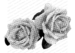 Impression Obsession - Rose Duo Cling Mounted Rubber Stamp By Dina Kowal