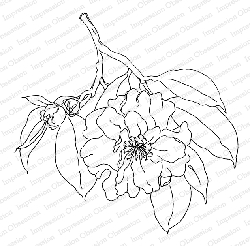 Impression Obsession - Camellia Japonica Cling Mounted Rubber Stamp By Alesa Baker