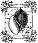 Magenta-Cling Stamp-Apple Shell Collage