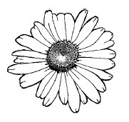Magenta - Cling Rubber Stamp - Little Daisy