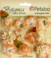 Petaloo - Botanica Collection - Botanica  Mini's X 11 - Peach