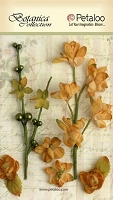 Petaloo - Botanica Collection - Floral Ephemera - Amber