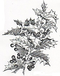 Rubber Stamp Avenue-Cling Rubber Stamp-Holly Branch