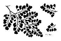 Designs by Ryn - Stencil - Maidenhair Fern (6