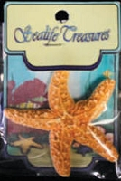Shells and Sealife - Sugar Starfish