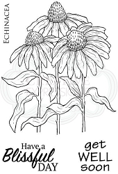 Woodware Craft - Clear Stamp - Echinacea