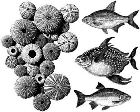 Art Journey - Unmounted Rubber Stamps - Fish
