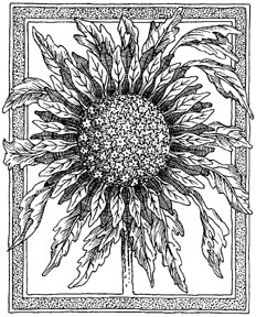 Impression Obsession Cling Mounted Rubber Stamp - Framed Sunflower
