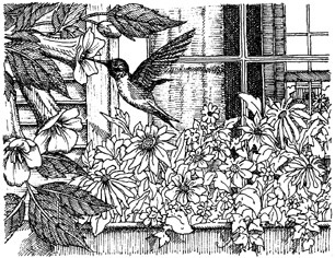 Impression Obsession Cling Mounted Rubber Stamp - Hummingbird Window Box