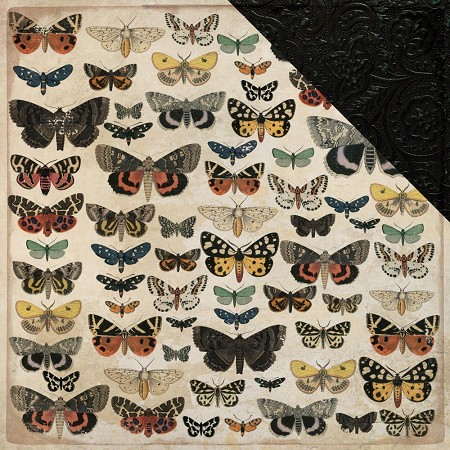 "KaiserCraft - Anthology Collection - 12""x12"" Double Sided Paper - Entomology"