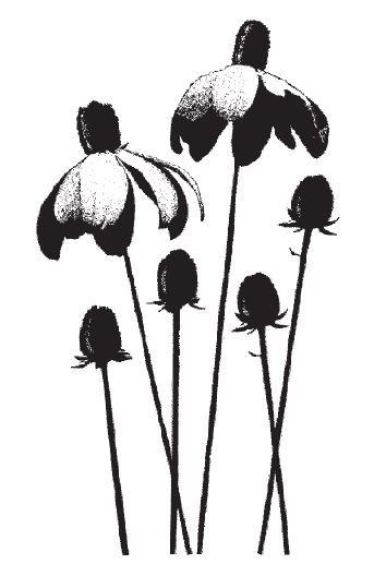 Magenta - Cling Rubber Stamp - Flowers & Buds