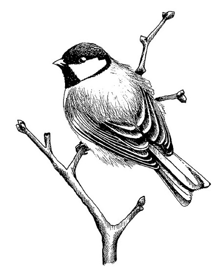 Magenta Cling Rubber Stamp Perched Chickadee
